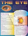 The Eye Educational Chart