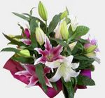 Oriental lily Bouquet - delivered