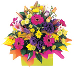 Colourful bright mix of Perth flowers - Rainbow sherbert