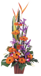 Sunken Treasure - bright orange and purple flowers