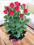 12 Roses in a box arrangement ~ Delivered