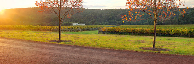 Brookland Valley Vineyard