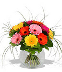Jolly Gerbs - Beautiful fresh flowers for delivery to Perth