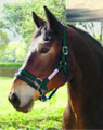 Pony Dually Halter (green) with Free DVD