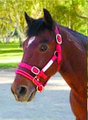 Small Dually Halter (red) with Free DVD