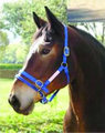 Large Dually Halter (blue) with Free DVD