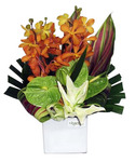 Compact Tropical Arrangement - Citrus