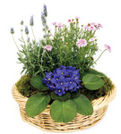 Plants Flowering Dish Garden