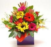 Mixed arrangement in kraft box