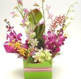 Orchid arrangement in kraft box