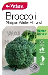 SEED VEGETABLE BROCCOLI SHOGUN