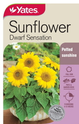 SEED SUNFLOWER DWARF     SENSATION