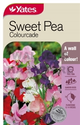 SEED SWEET PEA COLOURCADE