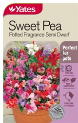 SEED SWEET PEA POTTED FRAGRANCE