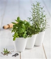 PLANTER IVY HERBS (WHITE)