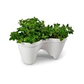 PLANTER IVY WHITE