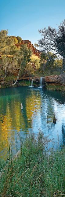 Fern Pool vertical