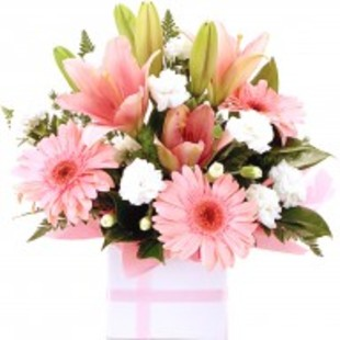 Pink Sweet FC2053