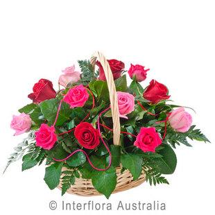 Caress Pink 240