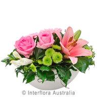 Rose 336