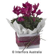Seasonal flowering plant