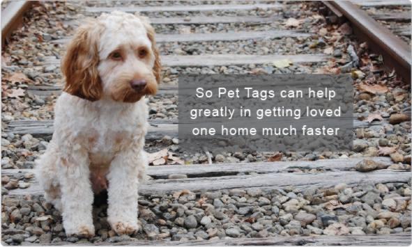 Pet Tags Australia